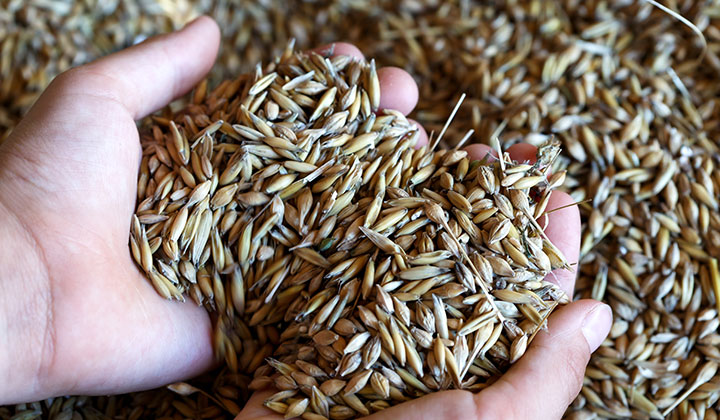 How beta-glucans in oats & barley reduce heart disease risk
